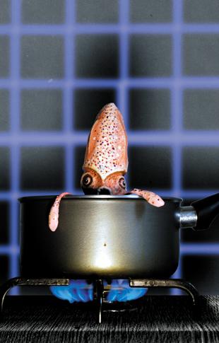 stirfry- squid - zine page 13 - blog. Neil Hughes Puppet Illustration.